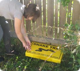 Snake trap snake removal